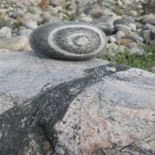 feature---harris-stone